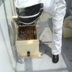 Piezo mic in the hive